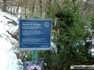 Hayedo Montejo; Reserva Biosfera Sierra Rincón; rutas cerca de madrid; club de montaña madrid